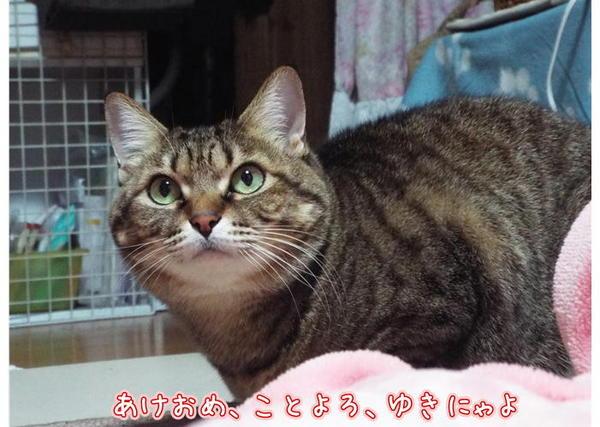 あけおめゆき.JPG
