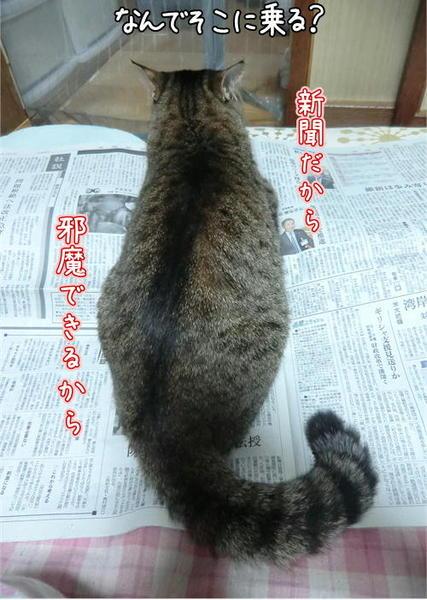 それが新聞だから2.JPEG