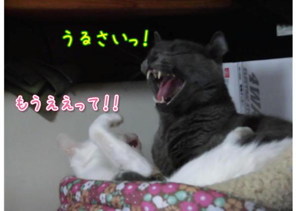 なかよし4.JPG