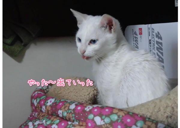 なかよし5.JPG