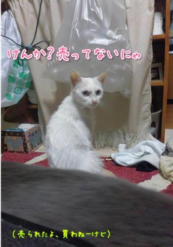 ねこぱんち2.JPG