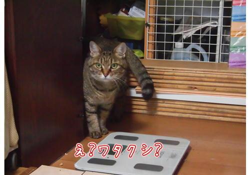 ねこぱんち6.JPG