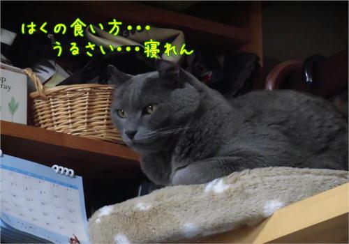 はくご飯.JPG