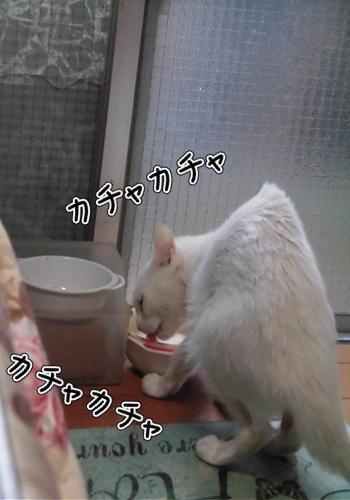 はくご飯2.JPG