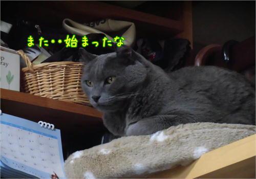 はくご飯5.JPG