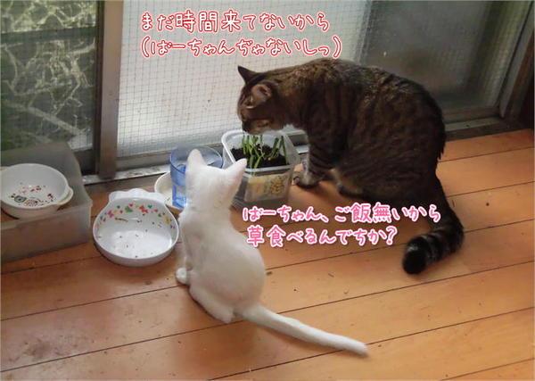 ゆきとはく.JPG