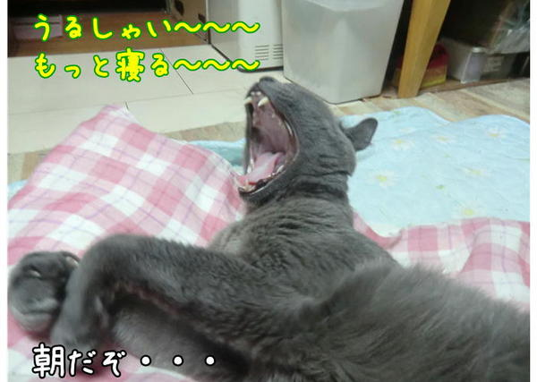 らぴ眠5.JPG