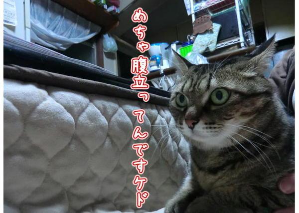 カメラ嫌い3.JPG