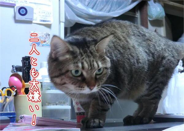 カメラ嫌い4.JPG