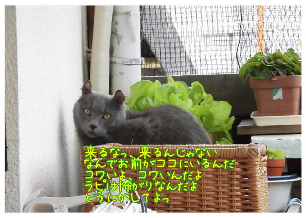 ラピの恐怖.JPG