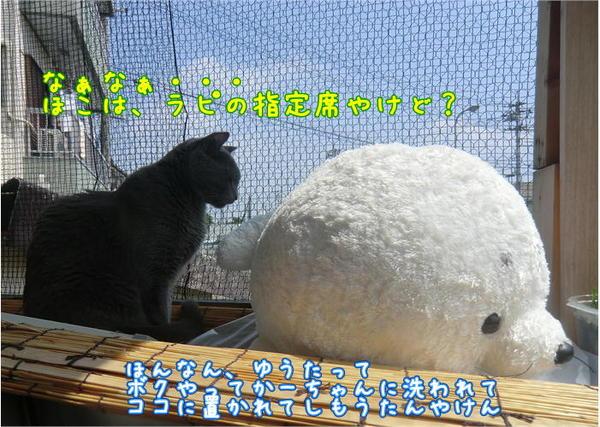 ラピ&あざらし.JPG