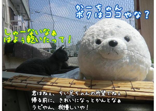 ラピ&あざらし2.JPG