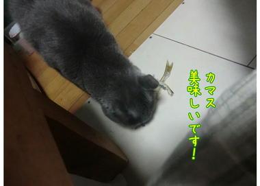 久しぶりのカマス.JPEG