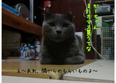 久しぶりのカマス2.JPEG