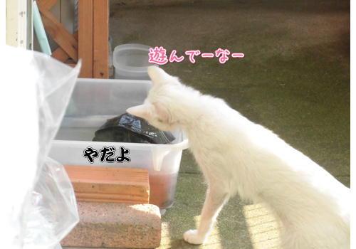 亀3.JPG