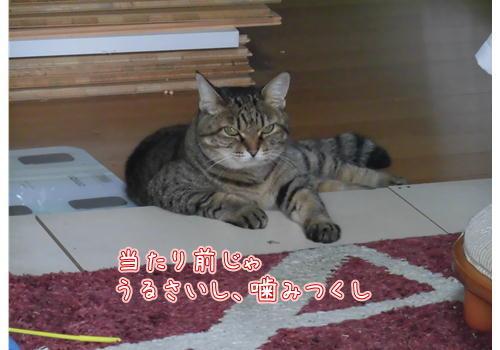 亀8.JPG