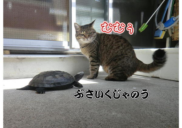 亀じいの朝3.JPG