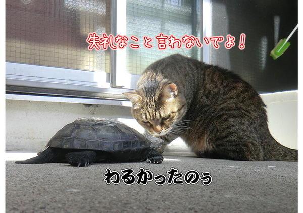 亀じいの朝4.JPG