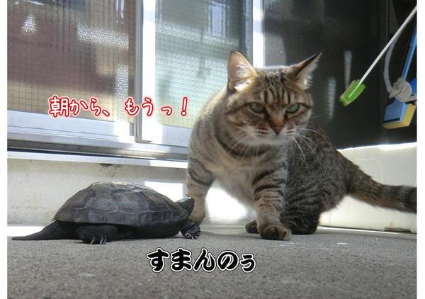 亀じいの朝5.JPG