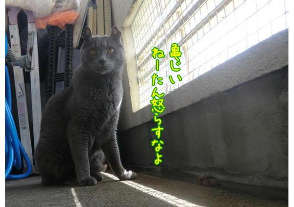 亀じいの朝6.JPG