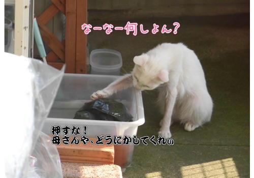 亀1.JPG
