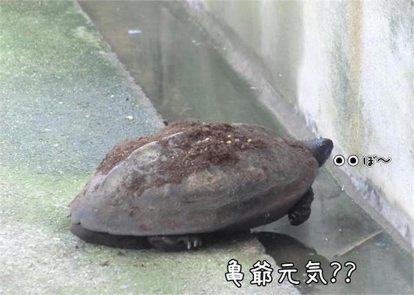 啓蟄2.JPG