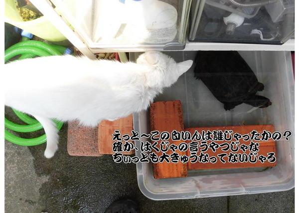 啓蟄3.JPG