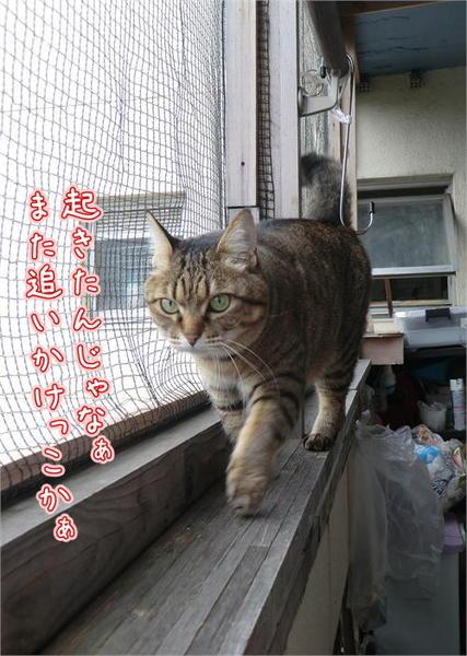 啓蟄5.JPG
