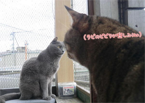 啓蟄6.JPG