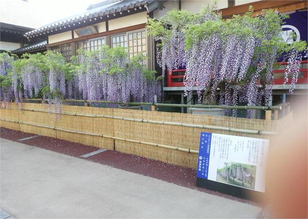 地福寺3.JPG