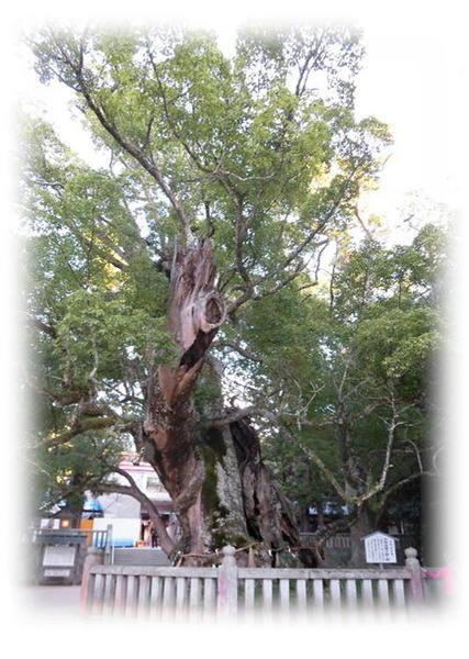 大山祇神社4.JPG