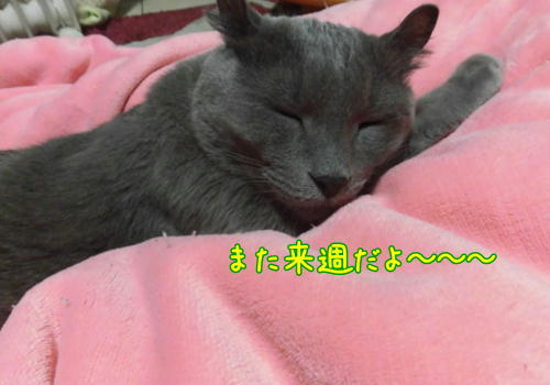 幸せな夢.JPG