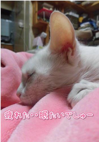 抜糸後3.JPG