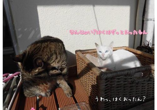 日向ぼっこ2.JPG