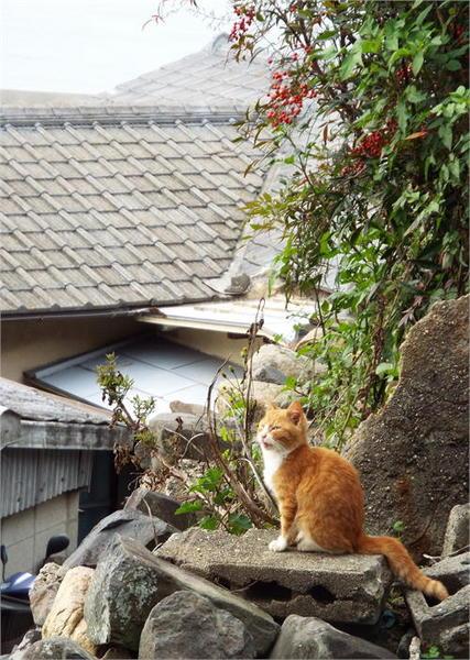 男木島9.JPG