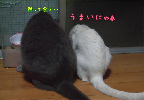 白黒.JPG