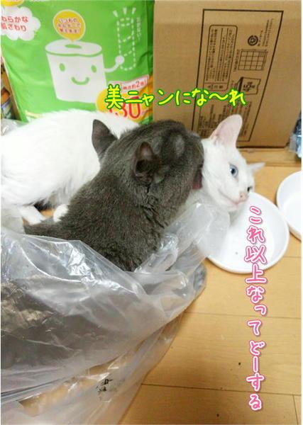 美ニャン.JPG