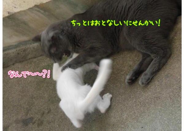 遊ぶ4.JPG
