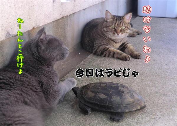 遊ぼう2.JPG
