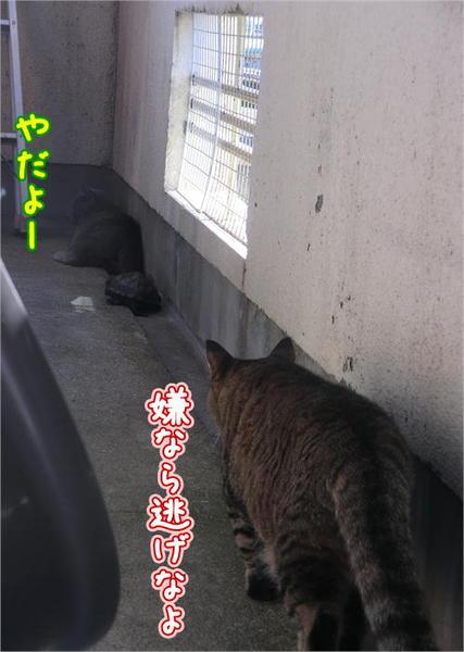 遊ぼう4.JPG