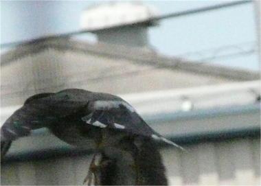 鳥.JPEG