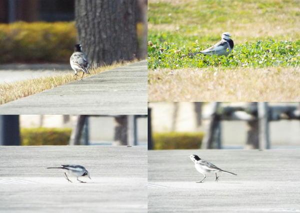 鳥追いかけて.JPG