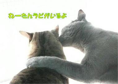 1慰め.JPEG