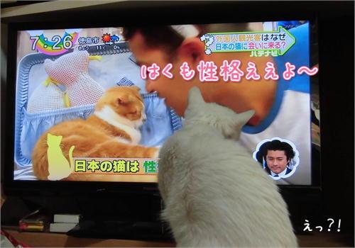 TV好き.JPG