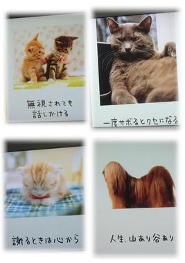 『人生はニャンとかなる!』『人生はワンチャンス!』.JPG
