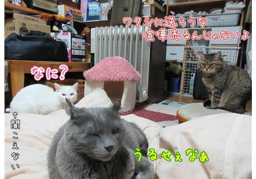 うちネコ集会2.JPG