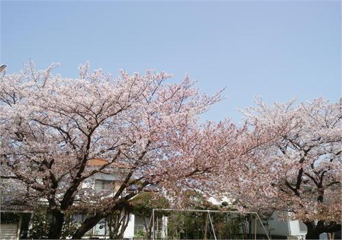 石井中央公園.JPG